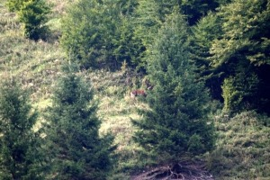 Wildtiere im Wald