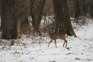 Wildtiere im Schnee