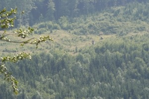 Bergaussicht Wald