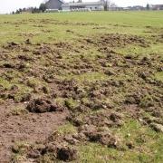 Wiesenschaden Bauernhof durch Wildschweine