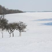 Winterlandschaft mit Bäumen