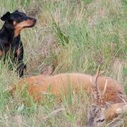 Jagdhunde Blogbeitrag
